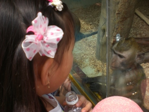 Acacia staring down a small monkey.