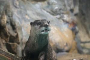 otter at sea world
